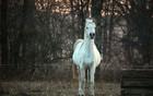 Tridesetak konja ostavljeno na Jugovićevu, građani zabrinuti