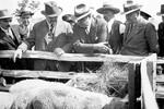 Poljoprivredni sajam u Novom Sadu pred Drugi svetski rat