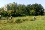 Počelo uklanjanje ambrozije u Novom Sadu i okolini