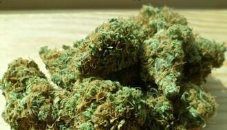Novosađanin iza rešetaka zbog marihuane