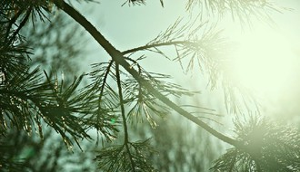 Jutro hladno sa mrazom, tokom dana oblačno