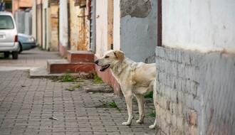 """Zbog tužbi za ujed napuštenih pasa """"Zoohigijena"""" imala 165 miliona dinara rashoda"""