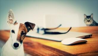 Dobra vest za ljubitelje životinja: U šoping sa ljubimcem