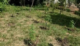 Policija u dvorištu kuće u Kisaču pronašla zasad marihuane