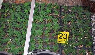 FOTO: U Novom Sadu otkrivena laboratorija za proizvodnju marihuane