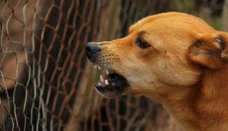 """""""ZOOHIGIJENA"""": Kasu prazne višemilionski zahtevi za odštetu zbog ujeda pasa"""