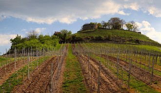 Voćarima i vinogradarima 125 miliona dinara