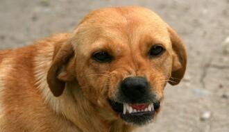 Tužbe zbog ujeda pasa sve više nagrizaju budžet Grada