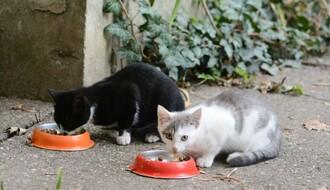 Novosađani traže promenu odluka koje zabranjuju hranjenje i postavljanje kućica za napuštene životinje