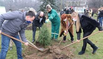 """U """"Dečijem selu"""" produžen život novogodišnjim jelkama (FOTO)"""