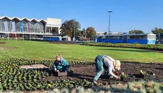"""FOTO: """"Zelenilo"""" počelo jesenje ulepšavanje grada"""