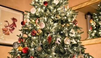 KAMPANJA: Zaštitimo jelke od bespravne seče pred božićne i novogodišnje praznike