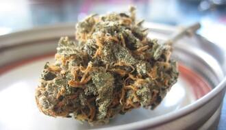 MUP: U stanu Novosađanina zaplenjeni narkotici i gasni pištolj