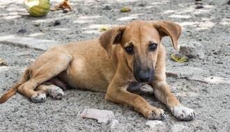 PANČEVO: Krivična prijava zbog ubijanja i zlostavljanja životinja