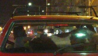 Novosađanin vozio tele u kolima!