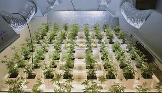 U Inđiji pronađena labaratorija za uzgoj marihuane
