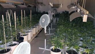 Novi Sad: Policija otkrila pet laboratorija za uzgoj marihuane