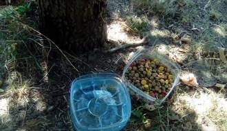 Novosađani udruženi: Postavljaju posude s vodom i hranom za napuštene životinje