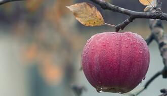 Novosadska firma prevarila nesuđene berače voća u Italiji