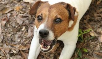 SALAJKA: Vlasnički pas istrčao iz dvorišta i ujeo dedu i unuka