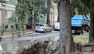 FOTO: Korenje drveta izazvalo havariju u Vojvode Mišića
