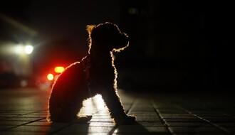Uskoro se ukida odredba o šetanju kućnih ljubimaca u večernjim časovima