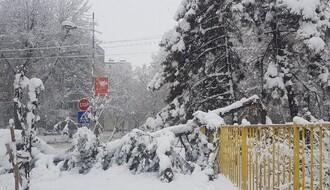 "JKP ""GRADSKO ZELENILO"": Apel građanima da ne parkiraju vozila u blizini drveća"