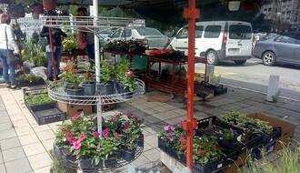 Prva jesenja Novosadska cvetna pijaca 11. i 12. septembra