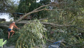 Na prepunom Oficircu iznenada se srušilo veliko drvo