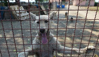 Na Novosadskom sajmu vikend u znaku pasa