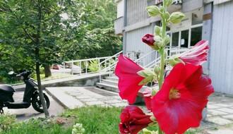 URBANE BAŠTE: Prelepi cvetni vrtovi Limana 1 i 2 oplemenjuju životnu sredinu (FOTO)