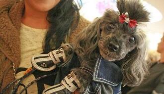 ISTRAŽUJEMO: Gde u NS psi mogu da se obuku po poslednjoj modi, gde da proslave rođus, a gde da se okupaju bez šišanja