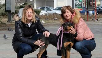 """UDRUŽENJE """"PET MONDO"""": Spasitelji napuštenih šapica"""
