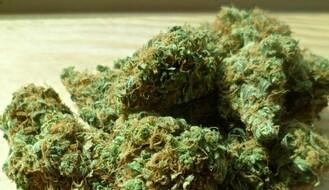 NS: Dvojica iza rešetaka zbog marihuane i amfetamina