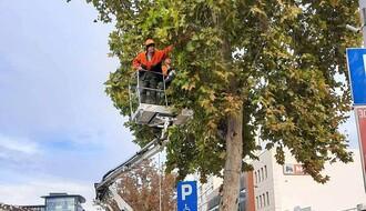 FOTO: Na Bulevaru oslobođenja u toku radovi na unapređenju zelenila