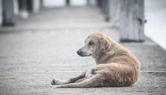 Program za smanjenje broja uličnih pasa