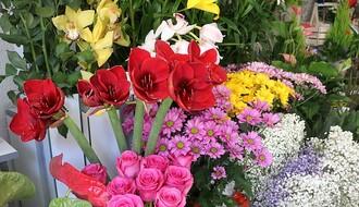 ISTRAŽUJEMO: Koje cveće Novosađani najradije poklanjaju za 8. mart (FOTO)