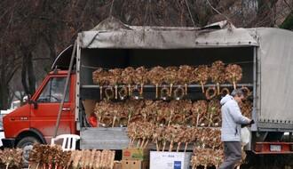 Podela besplatnih badnjaka u sredu u Novom Sadu