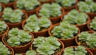 Izložba rukotvorina, cveća i zdrave hrane od 5. do 9. marta na Spensu