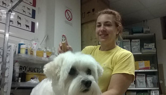 Modiranje kućnih ljubimaca: Kako psu izvući pramenove