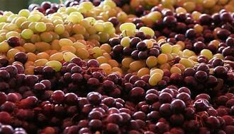 Novosadske tezge snadbevene grožđem, prodaja slaba