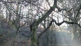 Beživotno telo pronađeno u šumi kod Sremskih Karlovaca