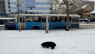 """JGSP """"Novi Sad"""": Efikasnost sprovođenja reda vožnje 96,94 odsto"""