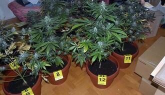 FOTO: U stanu u Novom Sadu otkrivena improvizovana laboratorija za uzgoj marhuane