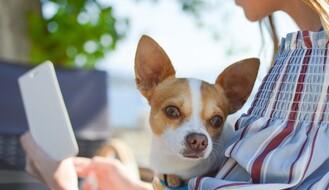 ISTRAŽIVANJE: Ljudi mogu da prenesu korona virus na pse i mačke