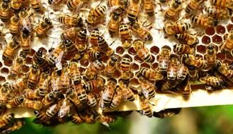 Izgubljena sezona za pčelare i voćare zbog zabrane kretanja