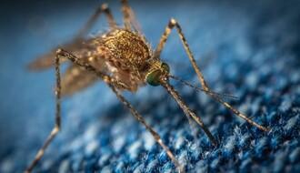 """PČELARI, OPREZ: """"Ciklonizacija"""" od ponedeljka počinje tretmane protiv komaraca"""