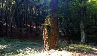 Korisnici domova za stare iz NS će jednom nedeljno imati organizovan izlet na Frušku goru