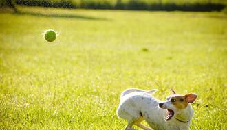Čemu su nas naučili psi