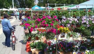 """Jesenji ciklus """"Cvetnih pijaca"""" od 15. septembra"""